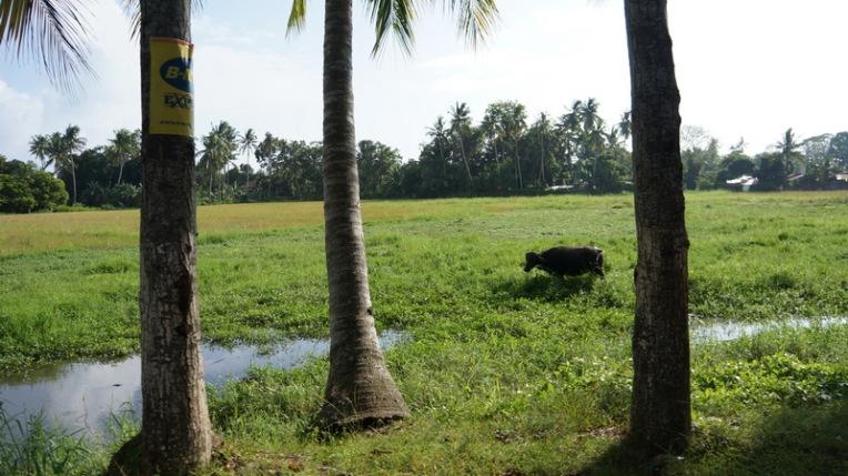 Philippines - Northern Mindanao - Ozamiz, Iligan, CDO - 020