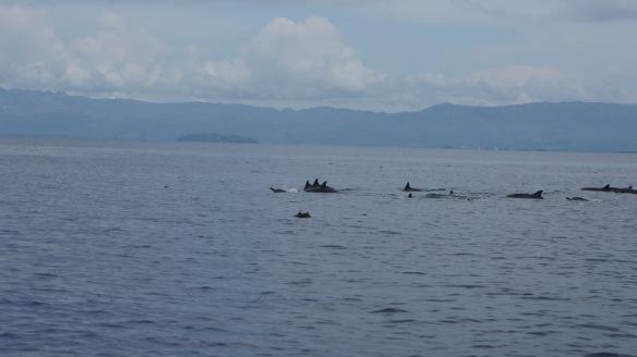 Philippines - Dumaguete June 2013 264