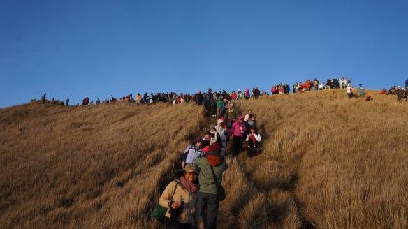 Philippines - Mount Pulag Feb 2014 597