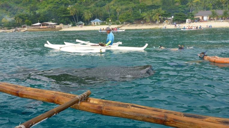 Philippines - Cebu and Bohol - 2014 0024