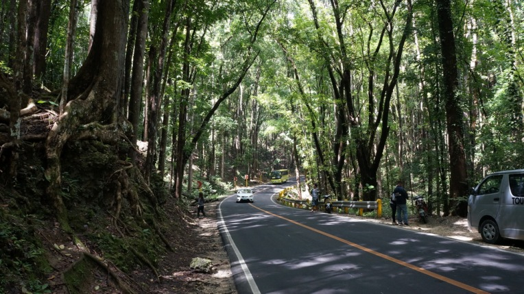 Philippines - Cebu and Bohol - 2014 0275