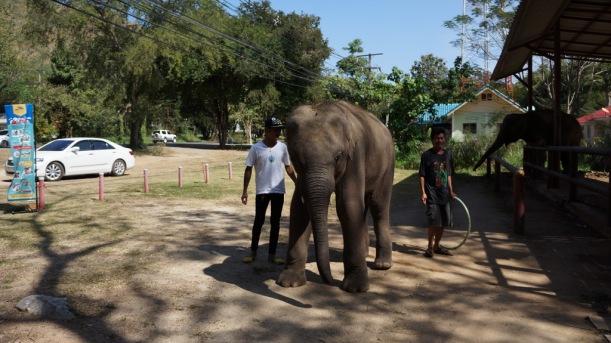 Thailand - Hua Hin, Khao Yai and Bangkok - 2014 625