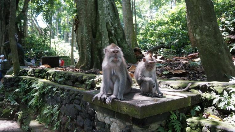Indonesia - Bali - 18th ~ 20th March 2015 253