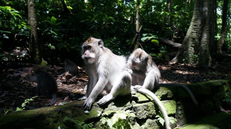 Indonesia - Bali - 18th ~ 20th March 2015 269