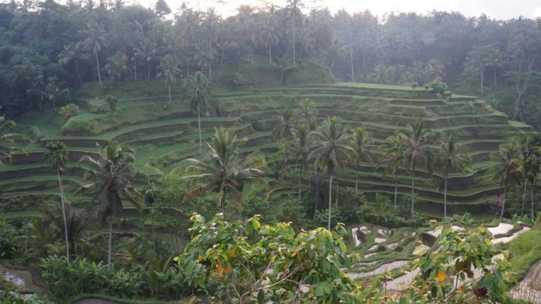 Indonesia - Bali - 18th ~ 20th March 2015 346